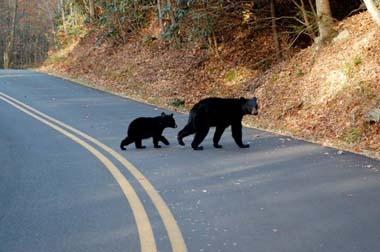 Bears Crossing near High Chalets